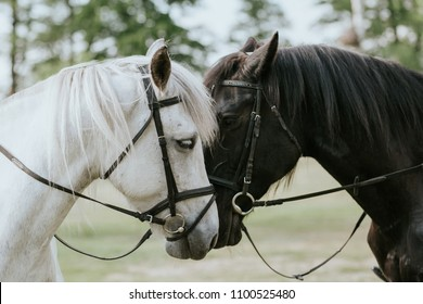 Animal friendship background. Two horses heads portrait.