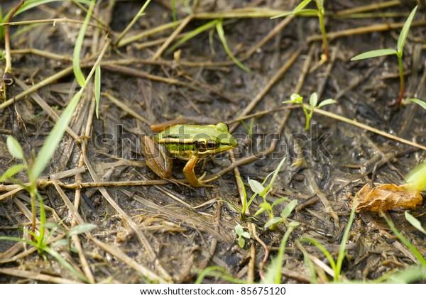 Animal, frog, eyes, head, legs, feet
