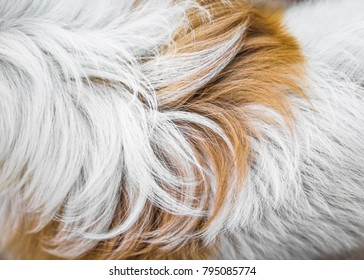 Animal fur background texture. Abstract dog fur in brown and white colors.