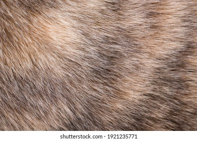Animal fur close-up as background
