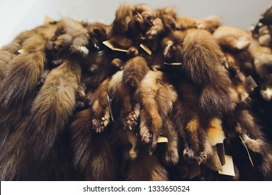 Animal fur. foxes, raccoon, wolf, beaver, mink, nutria hanging after processing.