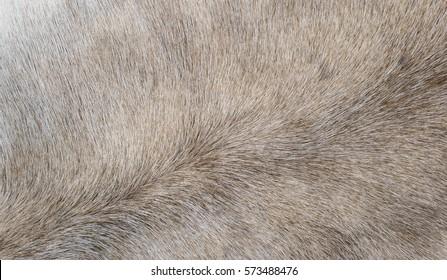 Animal fur natural background