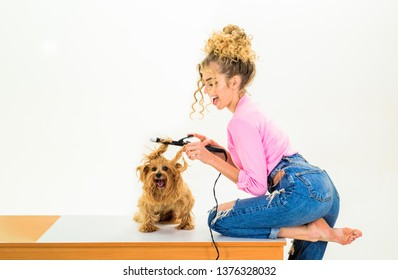 Animal grooming. Pet salon. Petshop. Dog salon. Beauty salon for animals. Grooming master making dog hairstyle. Pet grooming. Animal clinic. Vet.