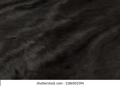 Animal hair of fur cow leather texture background.Natural Fluffy black cowhide skin.