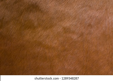Animal hair of fur cow leather texture background.Brown natural cow fur texture.Natural brown fur texture.