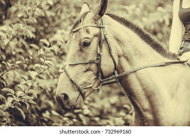 Animal, horsemanship concept. Portrait of brown horse in woods, natural sunlight and sepia