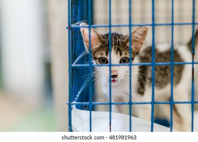 ANIMAL : left behind cat at an animal shelter