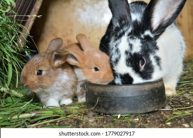 Animal love mother with smalll rabbits in the lair with hay
