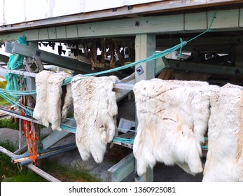 Animal meat and fur drying, Greenland