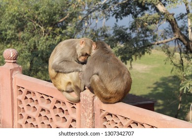 animal monkeys pic from nature