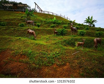 Animal and natural concept. Herds of deer are grazing on the hillside, where they plant coffee trees and banana trees. Selective focus and copy space.