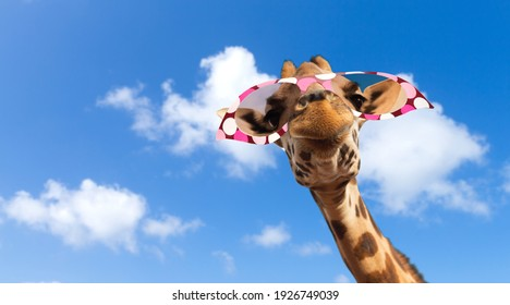 animal, nature and wildlife concept - funny giraffe in sunglasses over blue sky and clouds on background