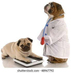 animal obesity - bulldog dressed up as doctor standing beside pug laying down on weigh scales