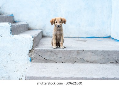 Animal outdoor : A little dog sitting on the stair.