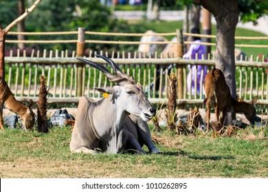 An animal in a park.