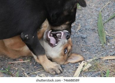 Animal pet black and brown dog on floor
