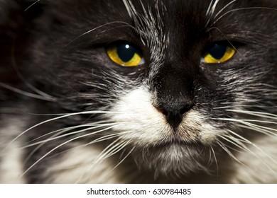 Animal Pet Cat