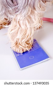 animal pet passport with yorkshire terrier dog