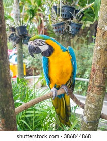 Animal picture of Macaw that is one kind of adorable bird