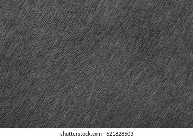 Animal pony skin close-up. Wool and skin close-up