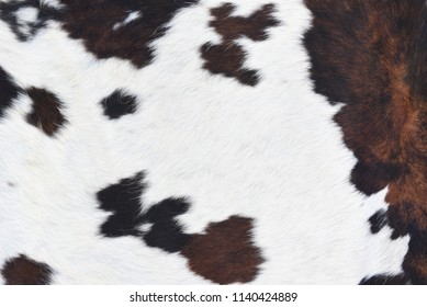 Animal real fur background