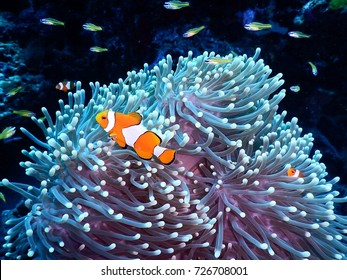 Animal in sea anemone