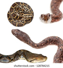 animal set, snake collection isolated on white