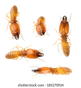 animal set termite white ant bug isolated collection