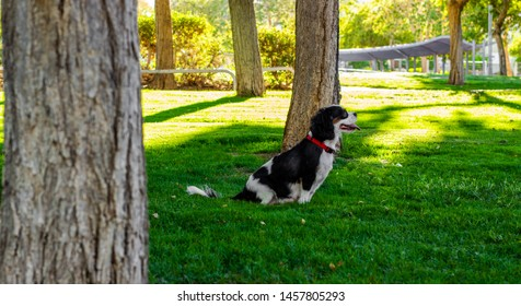 animal shelter concept wallpaper photography of photogenic smiling King Charles Cavalier dog profile portrait sitting in sunny green park outdoor meadow , copy space