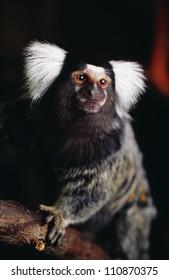 Animal sitting on branch
