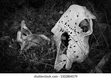 animal skeleton in the forest