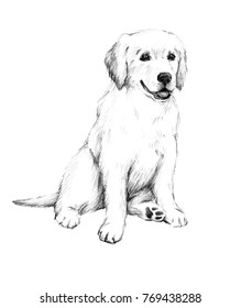 animal sketch pencil drawing of a dog cute little puppy illustration of a pet Labrador