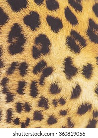 Animal skin texture for concept of nature