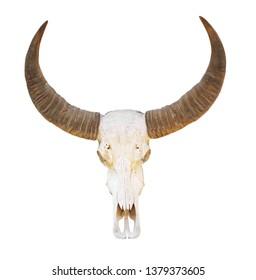 animal skull, isolated on white background