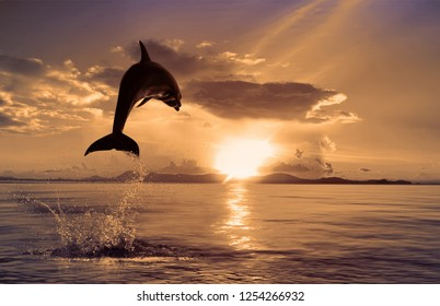 animal sunset fish background water