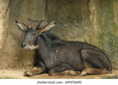 Animal of thailand
