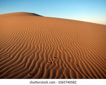 Animal traces in Rub Al Khali (Empty Quarter) desert in UAE