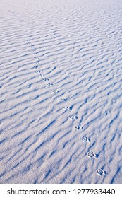 Animal Tracks in a gypsum sand dune of White Sands, New Mexico