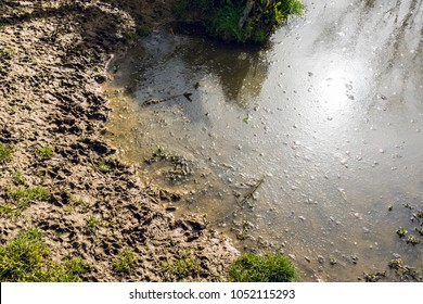 Animal tracks on the edge of muddy pond - nature abstract background - 1