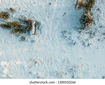 Animal tracks on the snow in forest