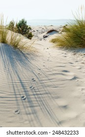 Animal tracks in the sand in the dunes