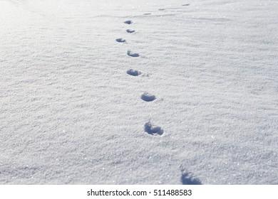 animal tracks in snow