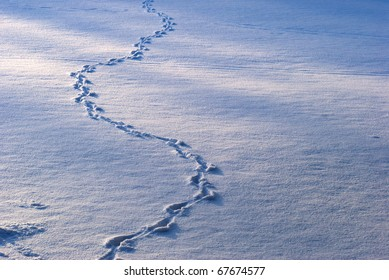 Animal tracks in snow covered field outdoors in Danish winter.