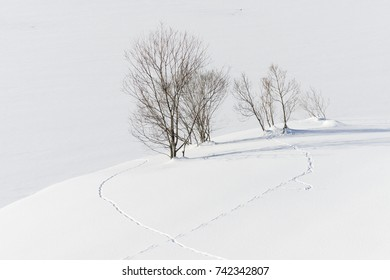 Animal tracks to the Trees at the shore of frozen Davoser see (Lake Davos) at city of  Davos during winter, Switzerland, EU