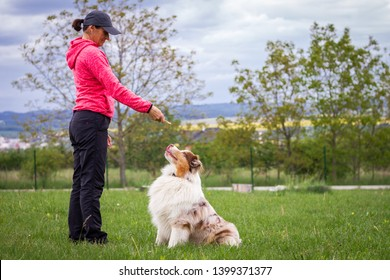 Animal trainer giving snack reward to dog after training. Woman and Australian shepherd. Pet owner with her dog outdoors