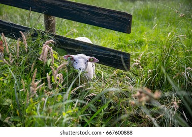 Animal tries to go through fence in netherlands