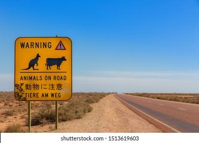 animal warning road sign - Outback Australia