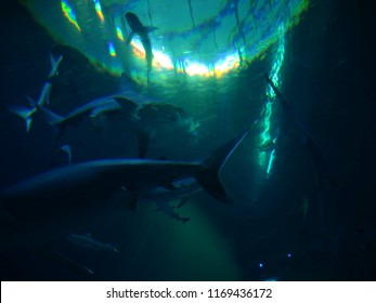 animal wildlife sea