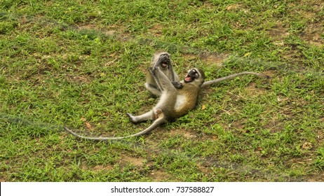 animal/monkeys/nature/funny