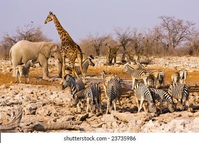 Animals around a water hole